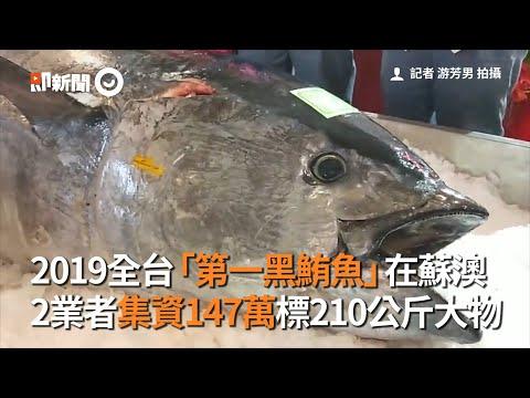 2019全台「第一黑鮪魚」在蘇澳 2業者集資147萬標210公斤大物