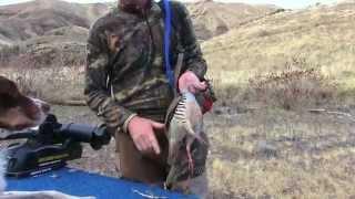 Chukar Hunting Day