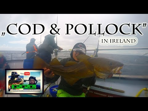 Deep Sea Fishing In Ireland - COD - POLLOCK