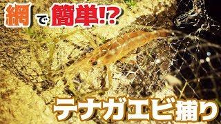 Gambar cover 【宍道湖】網ですくうだけ!絶品テナガエビ捕り