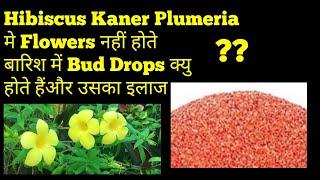 बारिश मे Flowers नहीं होते Bud Drops होते हैं?? Bud Drops Solution & Big Flowers