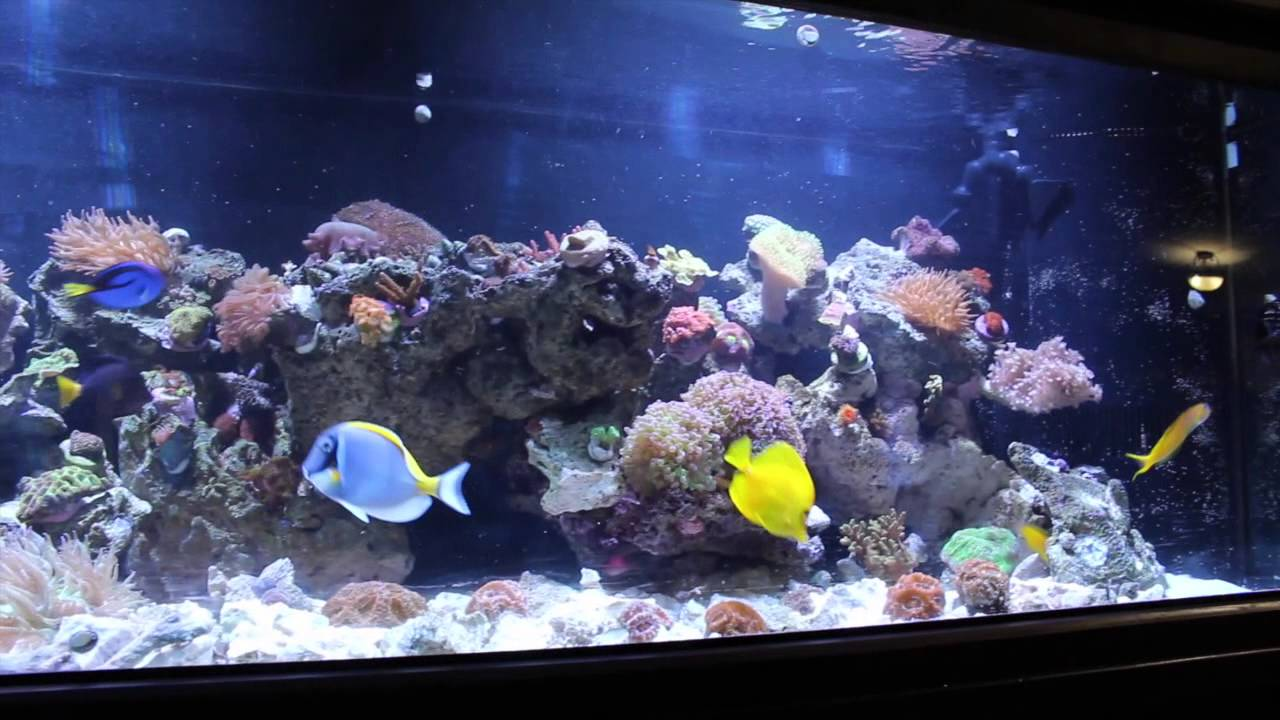 125 Gallon Reef Tank Fish Video