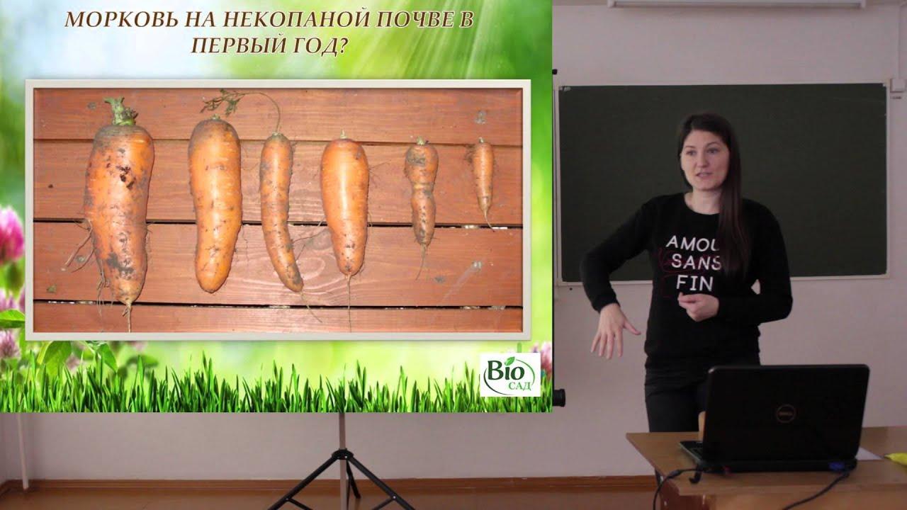 Корнеплоды: морковь, свекла, редис, редька, дайкон, репа, сельдерей