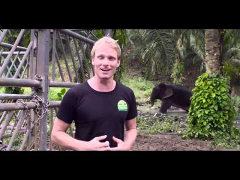 Malaysia's Unsung Conservation Heroes - Sabah's Wildlife Rescue Unit