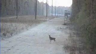 if u miss a deer three times, quit hunting