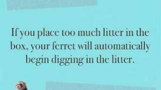 Ferret Litter Training
