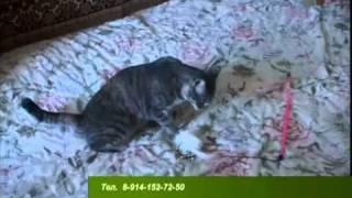 Зверская жизнь. Кошка Соня.