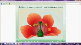 Двойное оплодотворение у цветковых растений. ОГЭ. ЕГЭ. Биология.(Используйте этот замечательный материал дл подготовки к уроку по ботанике, для подготовки к ОГЭ и ЕГЭ по..., 2016-11-29T14:16:58.000Z)