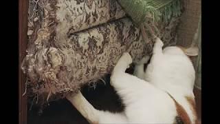 Когтеспрей - спрей для кошек