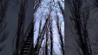 В Одессе кот упал с высоты 8-го этажа и выжил