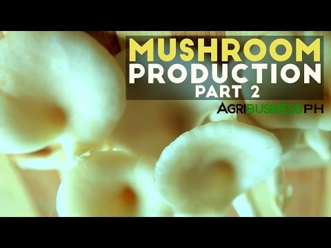 How to make mushroom pure culture | Mushroom production Part 2 #Agribusiness