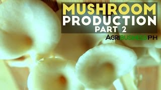Mushroom culture in the Philippines - Agribusiness Season 3 Episode 10 Body 2