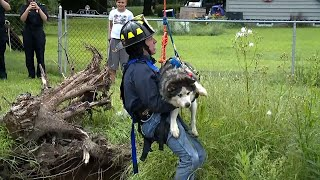 14-Year-Old Husky Pulled From Sinkhole in Owner