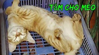 Cách tắm cho mèo thật dễ dàng !