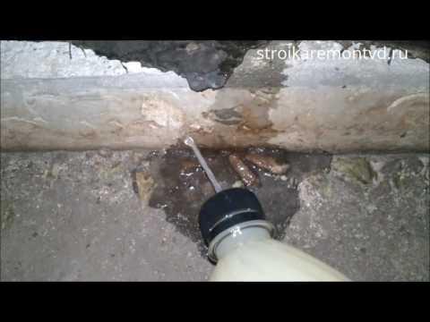 Уничтожение муравьев в