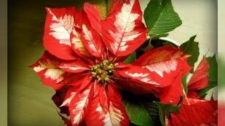 Комнатные цветы.  пять хитростей по уходу