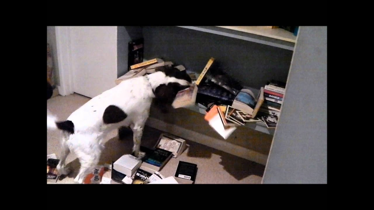 FUNNY DOG IN PRISON VIDEO - SuperDog - YouTube