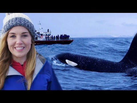 Why Misunderstanding Killer Whales is Threatening their Survival | Earth Unplugged