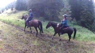 2015 bandit springs endurance ride