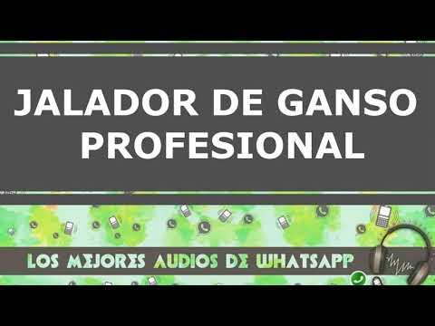 WhatsApp Audio de Risa 2018 - JALANDO EL GANSO  24 /7