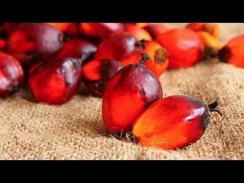 European Union threatens Guinea with palm oil ban