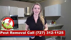 Pest Control Dunedin FL - Pest Removal Dunedin Florida - Termites Bed bugs Clearwater FL