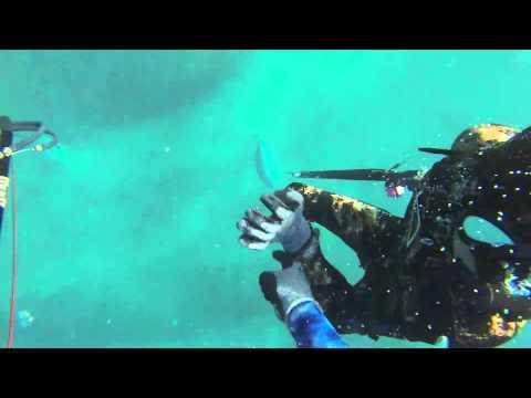 TeamDeepBlue STONERS!   HD Vimeo