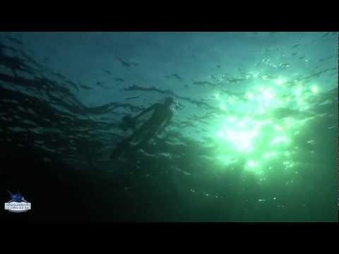 Expédition tortue marine Grèce PART 3