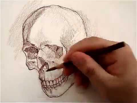 Dibujo del cráneo Juan Herrera por Anatomía Artística - YouTube