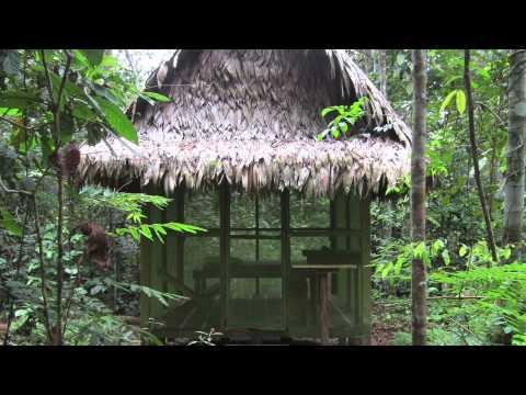 "FOX News ""Medicine Hunter"" Ethnobotanist Chris Killham Discusses Amazonian Plant Medicines"