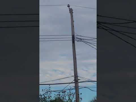 Attack on our power grid