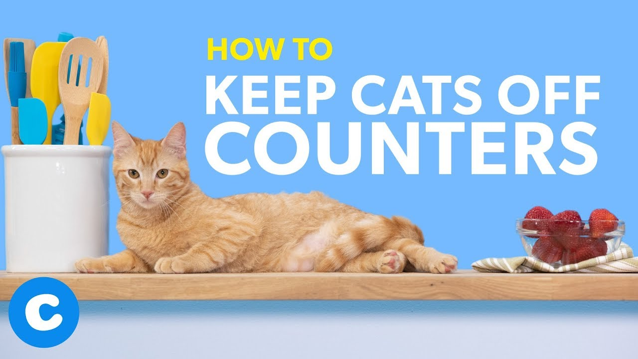 How To Keep Cats Off Counters Chewy