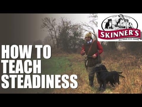 Gundog training tips - steadiness