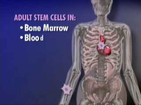 Adult Stem Cell Research Avoids Ethical Concerns
