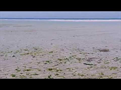 Bateau Rouge (Feat. Lou Lou Ghelichkhani) - Thievery Corporation : Jeju Island