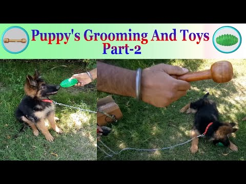 Puppy's Grooming And Toys Part-2