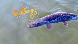 МЕЧТАЛ О ТАКОЙ РЫБАЛКЕ рыбалка на трофейную щуку Часть 2