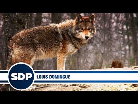 Louis Domingue | The Steve Dangle Podcast
