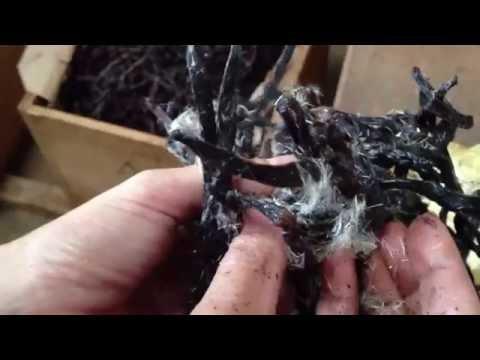 Ndali Vanilla Vanillin Crystals