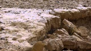 Flash Floods in Wadi Peres שיטפונות נחל פרס נשיא נחלי הנגב