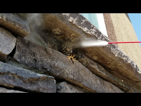 How Not To Get Rid Of Wasps Freezing Bug