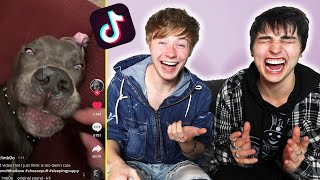 The Funniest Animal Tik Toks I've Found.. | Colby Brock