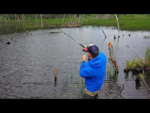 Вот это Рыбалка на Щуку! Как же Я ошибался когда думал что в этом Лесном Пруду ТАКИЕ не Ловятся!