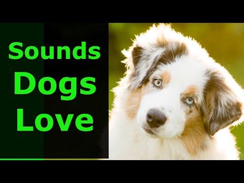 sound-that-makes-dog-tilt-head-left-&-right-prank-your-dog---excite-your-dog.