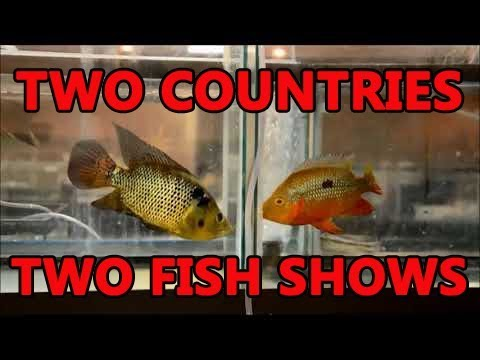 United States versus Canadian Fish Shows!