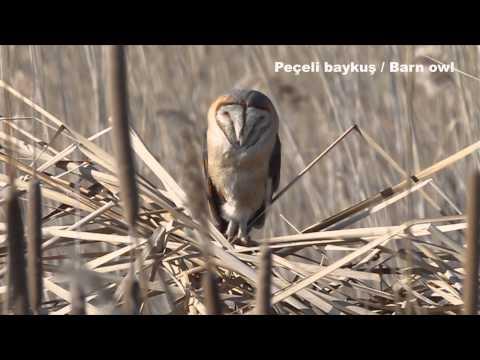 Türkiye'nin Kuşları, Şubat 2013