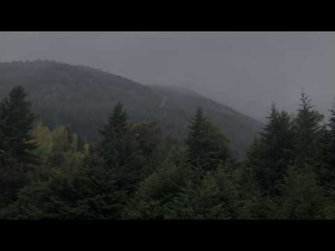 Rainy Day in Forest 10hrs. Peaceful RAIN sounds for relaxation and Sleep | Rain Showers in Forest
