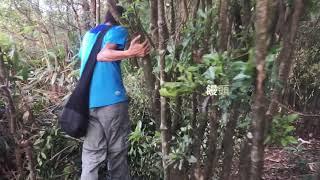 Publication Date: 2019-05-02 | Video Title: 山遊HKD:【沙田出發】水泉澳飛來石水泉澳