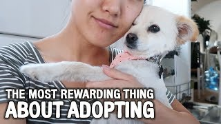 Why You Should Adopt   WahlieTV EP606