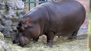 11 Most Powerful African Animals